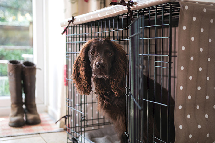 TOP 10 TIPS TO CRATE TRAINING A PUPPY
