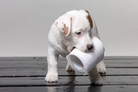 Puppy carrying a toilet roll The Cosy Canine Company Blog