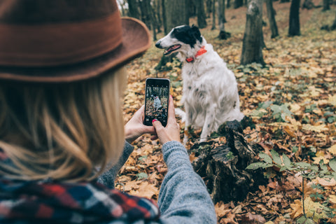 Dog walking essentials blog The Cosy Canine Company Dog having photo taken