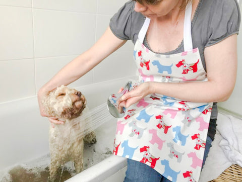 Muddy Cockapoo having a bath. Woman wearing a wipe clean apron with scottie dogs on.