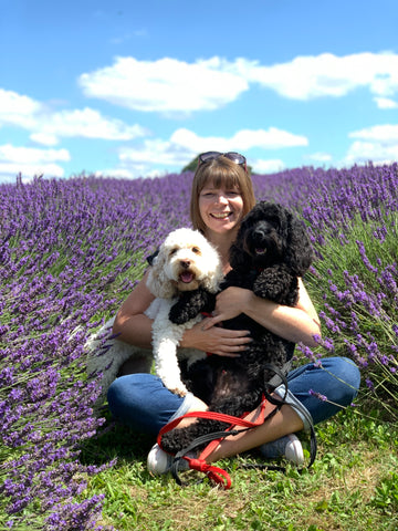 The Cosy Canine Company Two cockapoos in lavender field with owner.