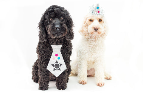 Top 5 new years resolutions inspired by a cockapoo