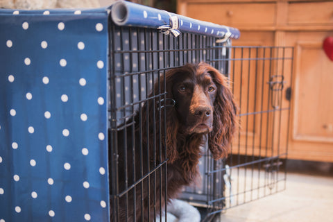 Crate Training Spaniel Blue Dog Crate Cover