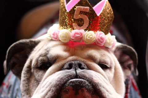British Bulldog 5th Birthday party The Cosy Canine Company