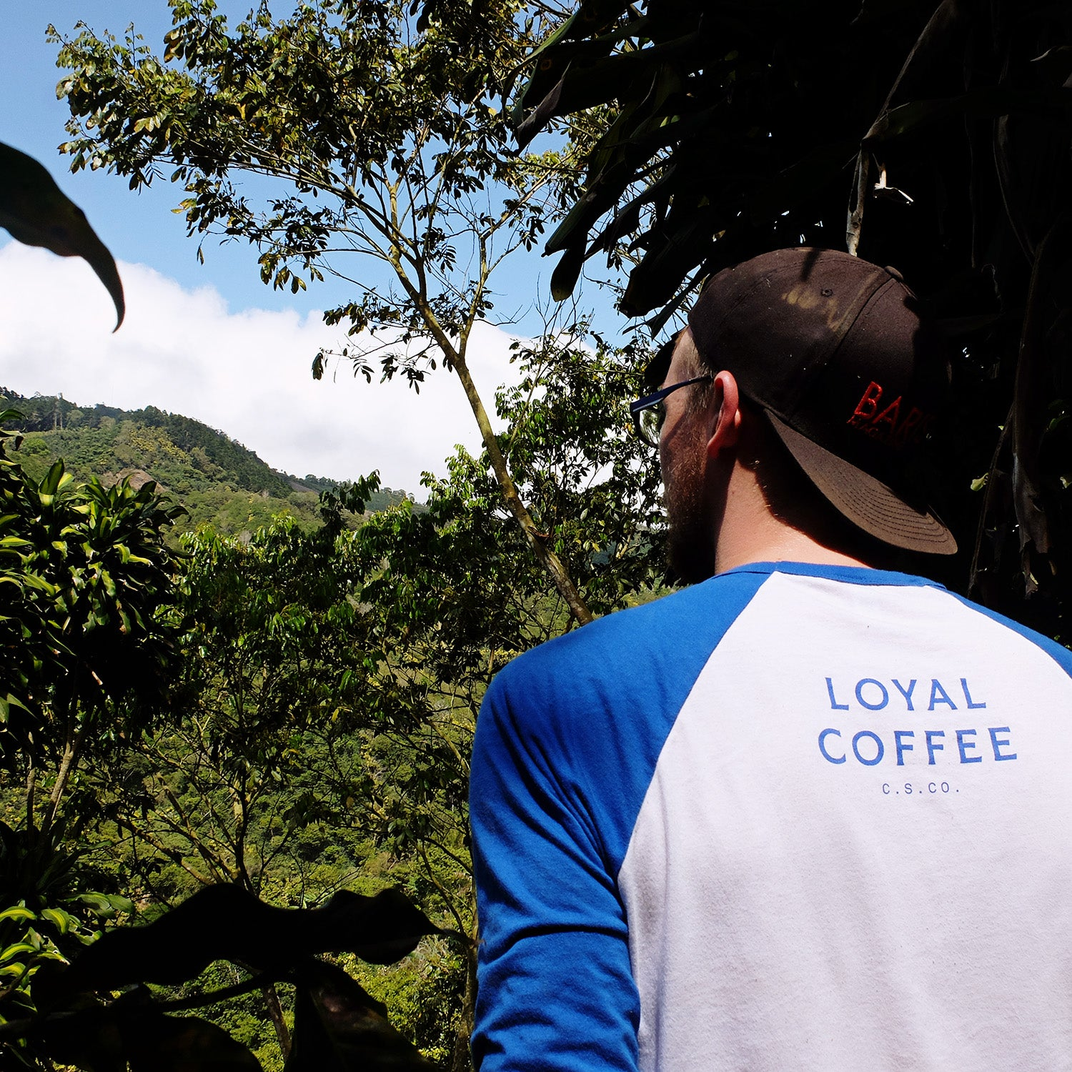 Loyal Coffee in Costa Rica