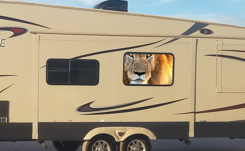 Lion Universal RV Camper or 5th Wheel Window 50/50 Perforated Vinyl Decal