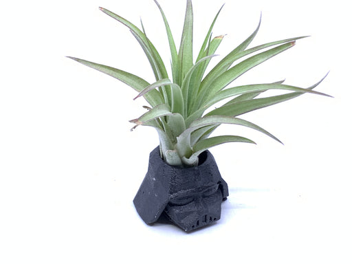 Darth Vader Helmet Small Air Plant Holder - The Candleman's Natural Candles