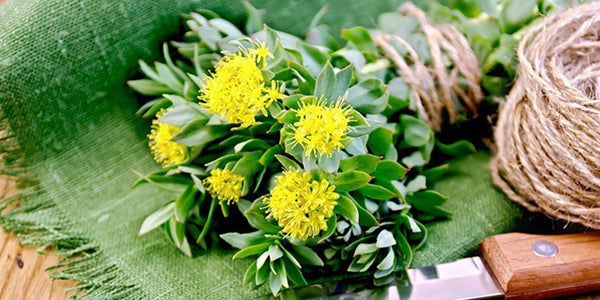 Support Healthy Mood And Stress Levels With Rhodiola Rosea