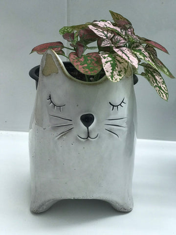 Miss Kitty Planter