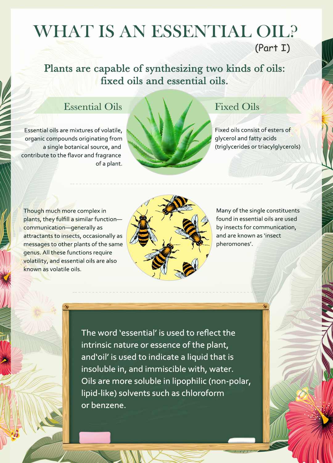 Top 3 Best 100 Pure Lavender Essentail Oil Uses Benefits Victsing
