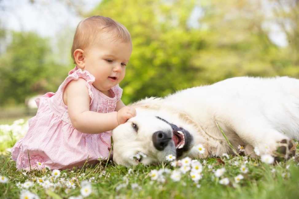 Best Dogs For Families With Babies