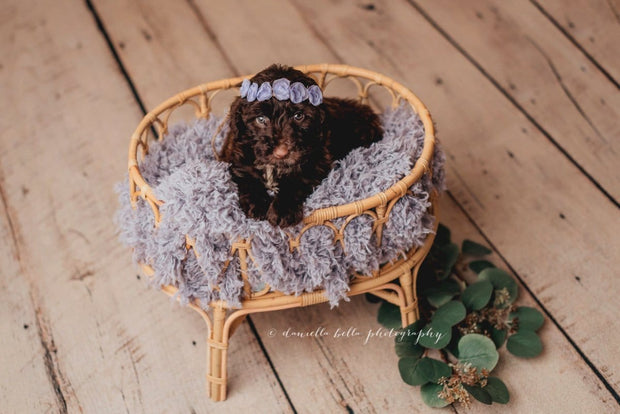 frosted purple, super soft, faux fur with puppy in basket