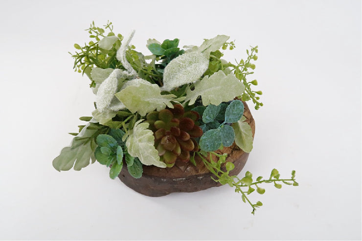 small succulent plant on wooden riser for photography accent in studio