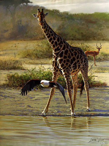 South African Wildlife Art & Artists | Fine Art Portfolio