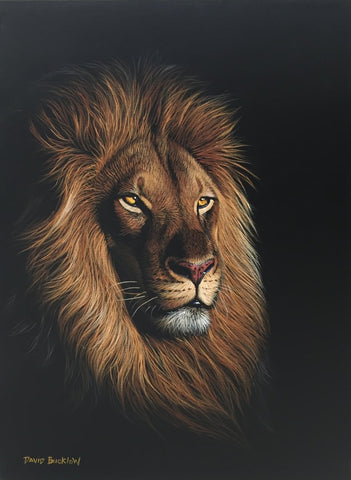 Buy Lion Art By South African Wildlife Artists Fine Art