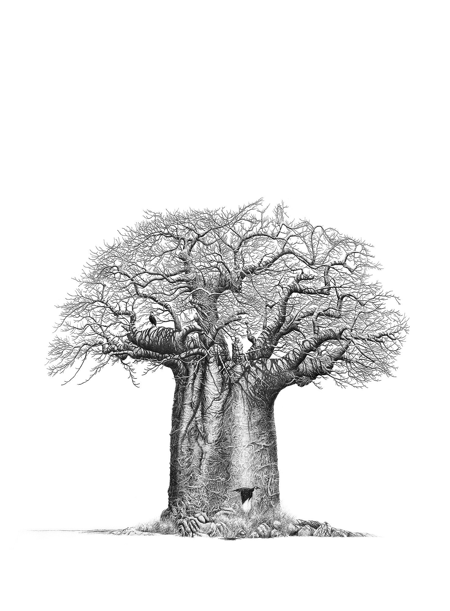 Baobab tree drawing by artist bowen boshier