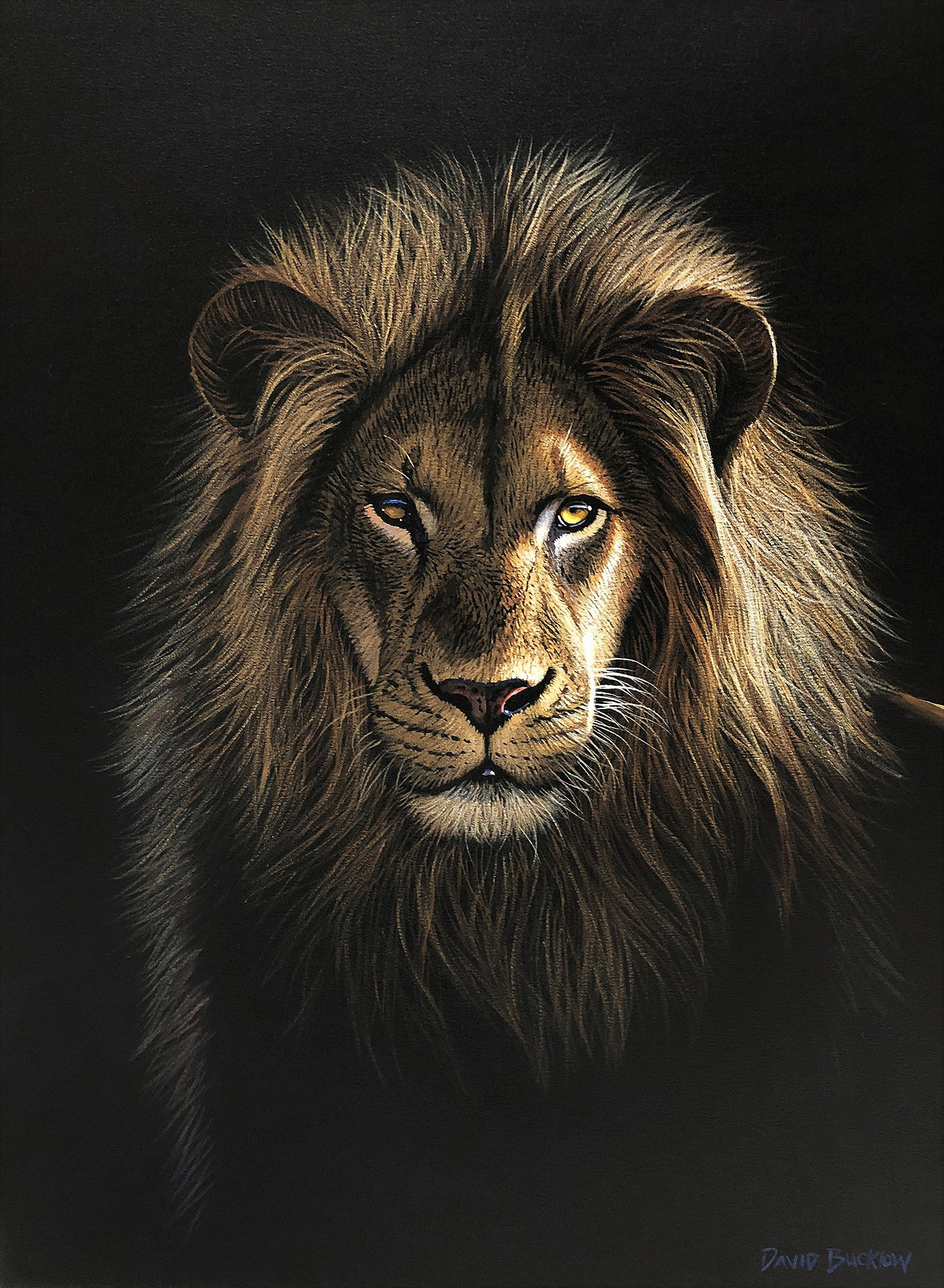 The Majestic One Lion Painting By David Bucklow