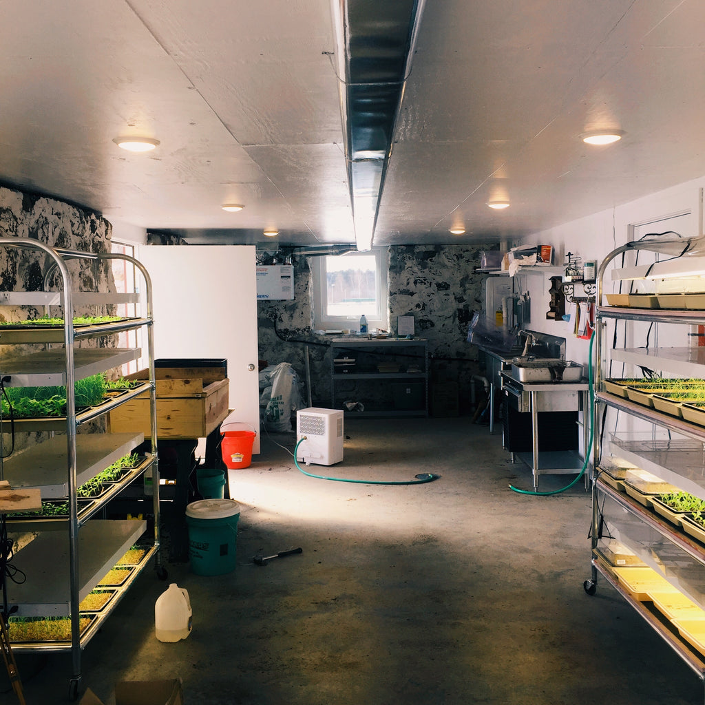 Seeding in the Barn, Extra-Early Produce, and a Pandemic
