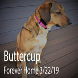 Buttercup Dog adopted to her forever home from Greeneville Greene County Humane Society 3/22/19
