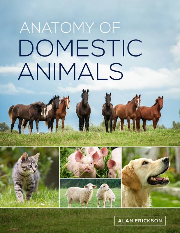 Anatomy of Domestic Animals – bluedoor Shop
