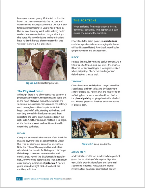 Large Animal Medicine and Nursing for Veterinary Technicians