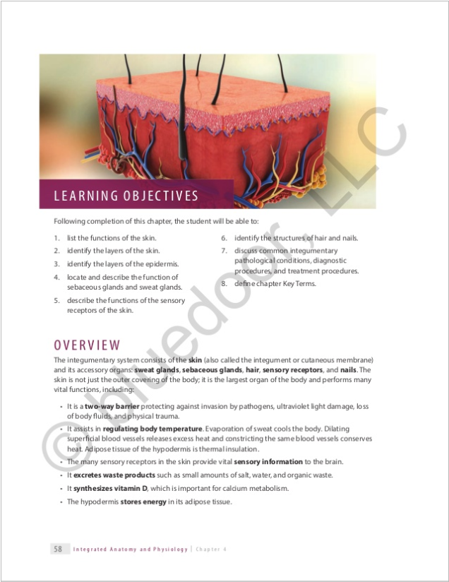Integrated Anatomy and Physiology for Allied Health – bluedoor Shop