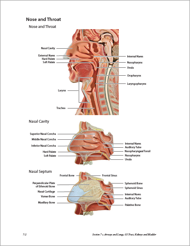 Atlas Of Anatomy For Allied Health 3rd Edition Bluedoor Shop