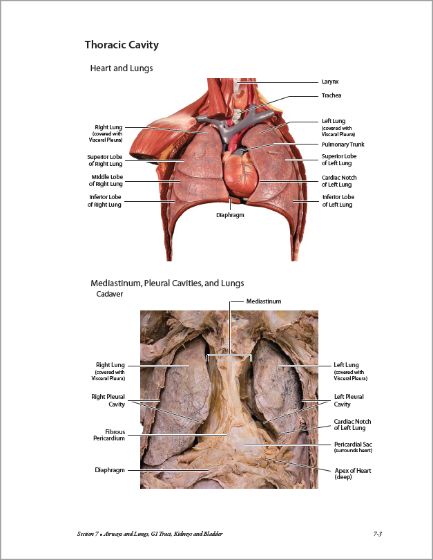 Atlas of Anatomy for Allied Health, 3rd Edition – bluedoor Shop