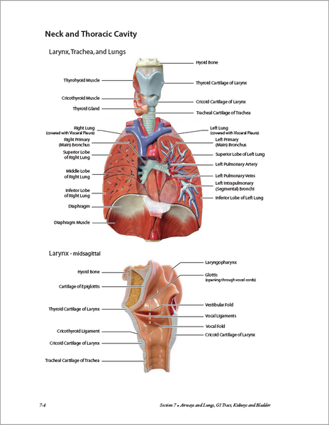 Atlas of Anatomy for Allied Health, 3rd Edition