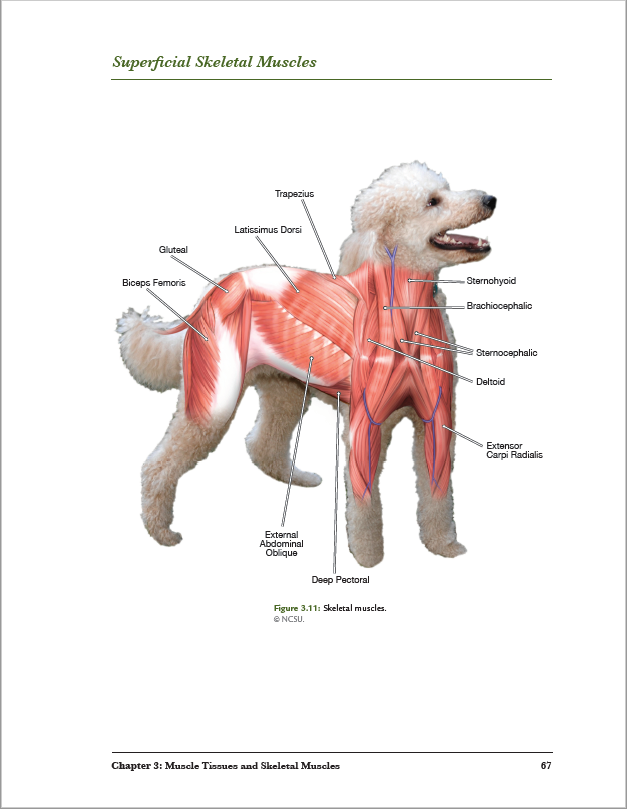 Dog Anatomy - A Photo Atlas, Second Edition – bluedoor Shop