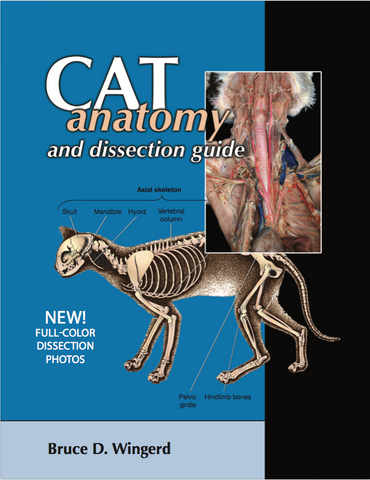 Cat Anatomy and Dissection with Photos
