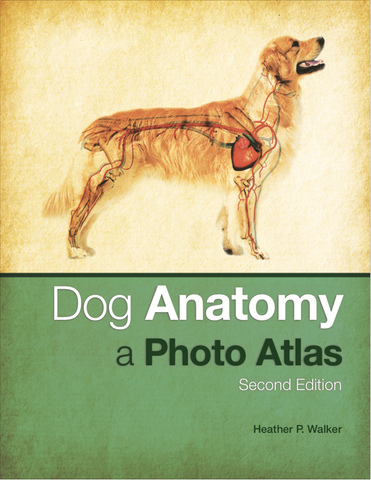 Dog Anatomy - A Photo Atlas, Second Edition