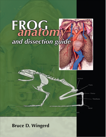 Frog Anatomy and Dissection Guide
