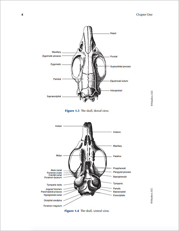 Rat Anatomy And Dissection Guide Bluedoor Shop