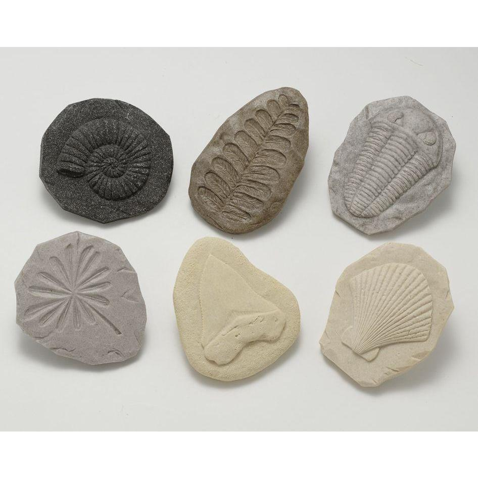 Fossil Print Stones - Little Whispers
