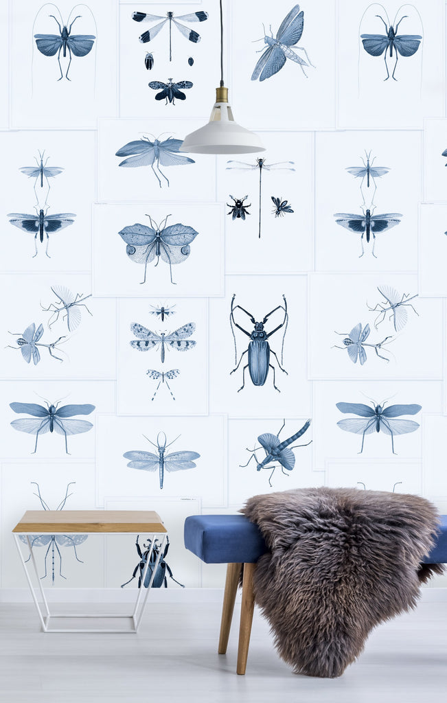 Entomology Insects Wallpaper