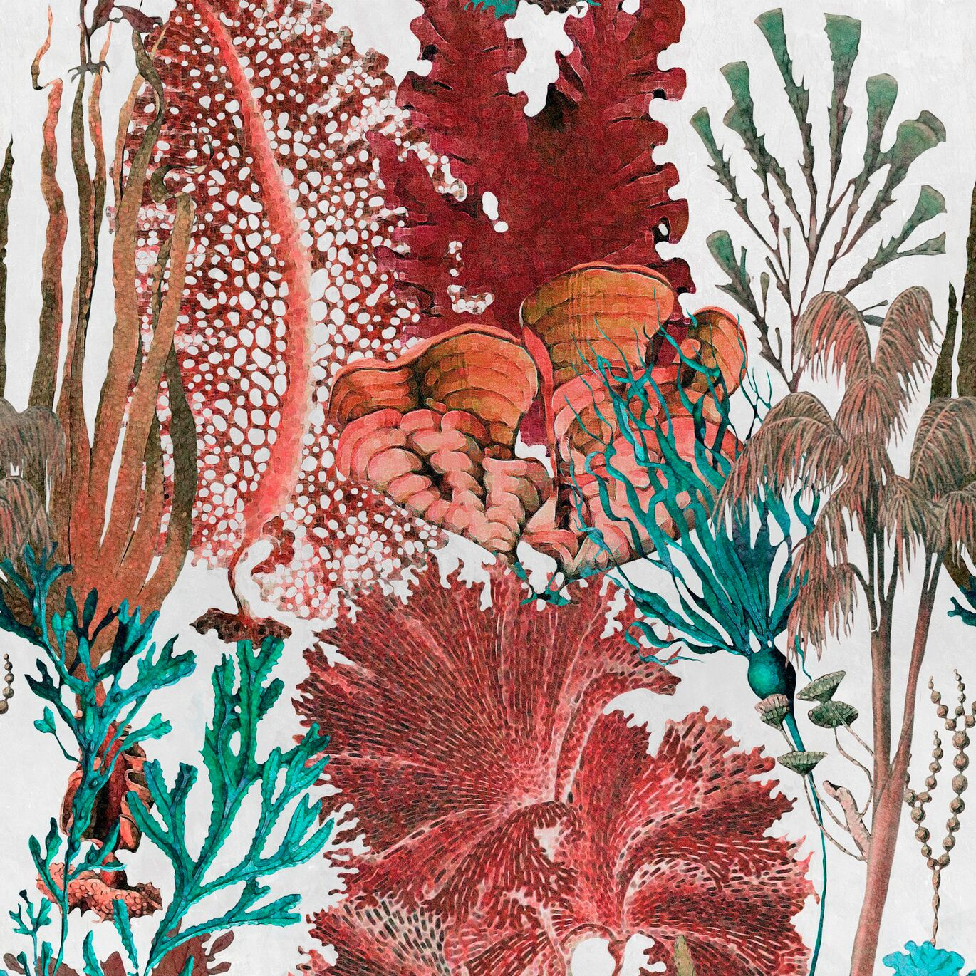 Coral Reef Wallpaper April The Bear
