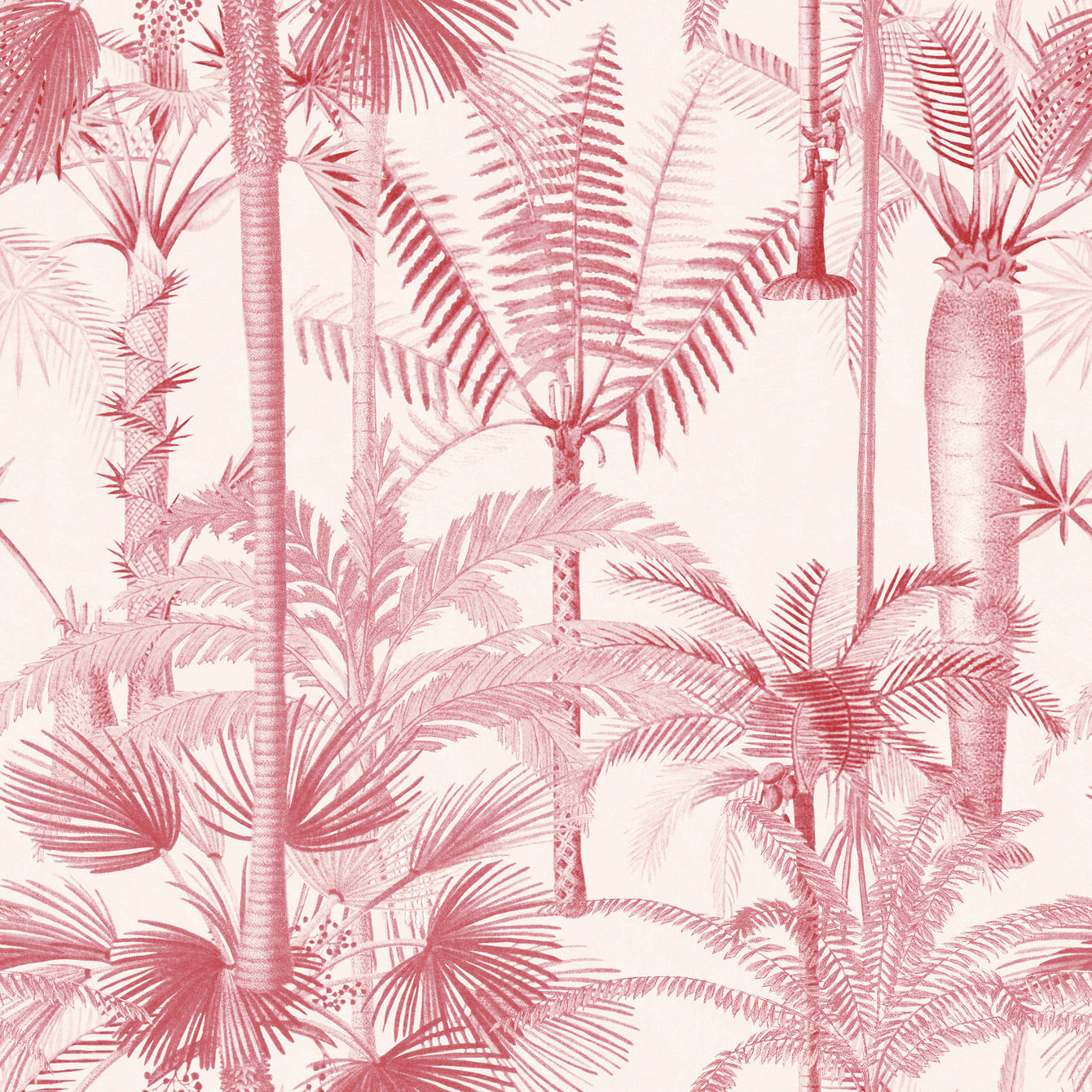 Palmera Cubana Wallpaper