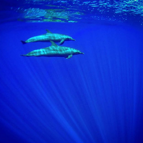iPhone Underwater Photo of Whales Hitcase Pro