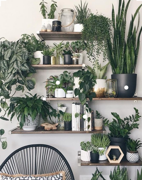 Millennials Have Swapped Buying Houses For Buying Indoor Plants