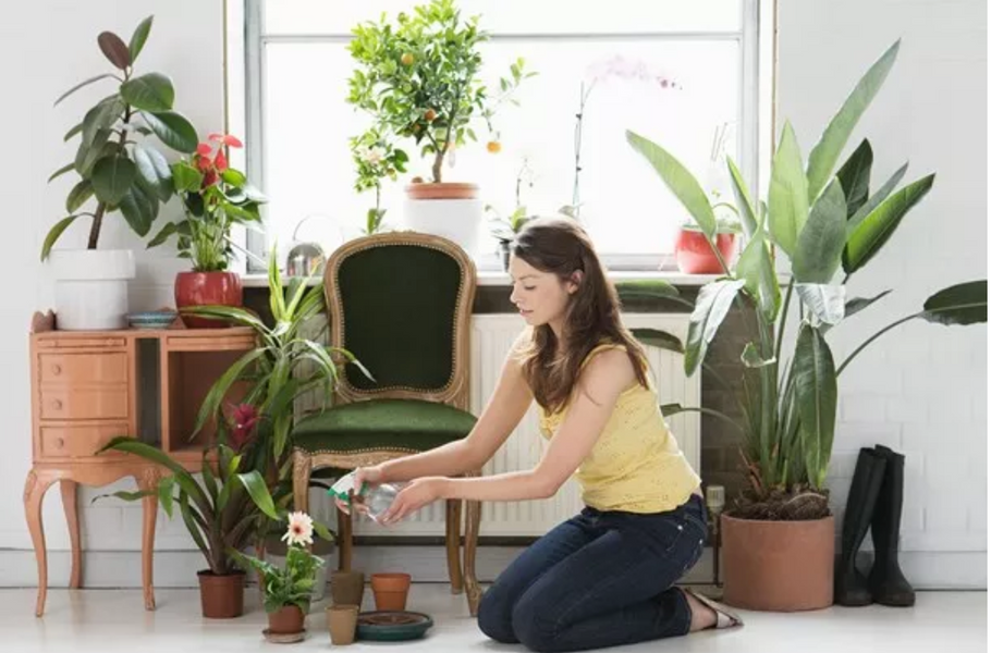 The hot new indoor plant trend of 2019