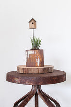 Bird house stick in Crafty Plants Perth