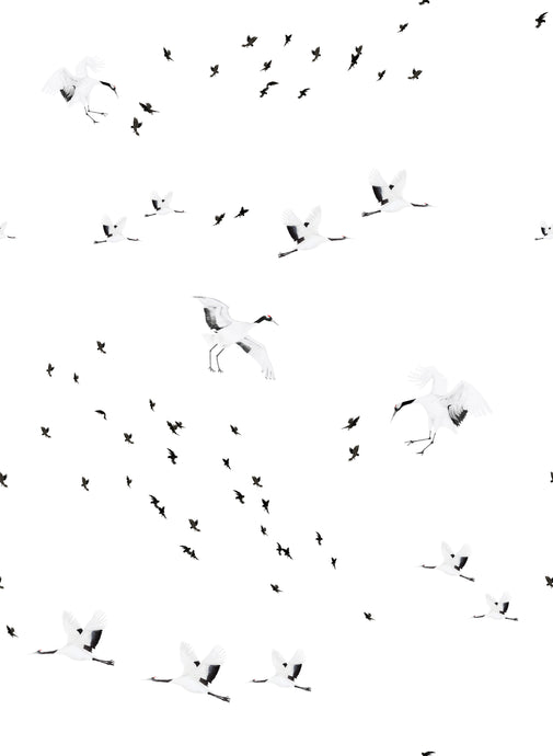 Birds in Flight Wallpaper Sample - Mono