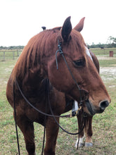 Average Size Draw Gag Headstall