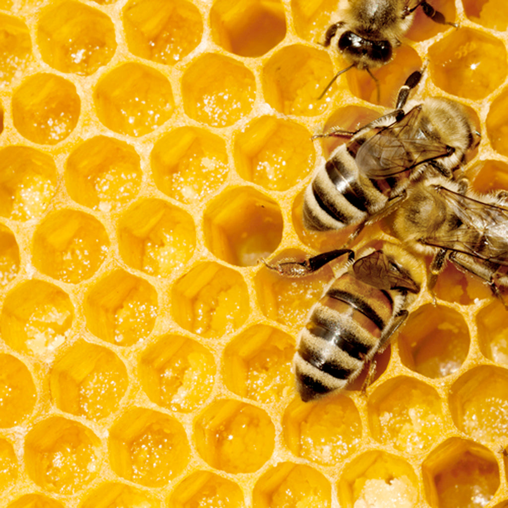 Real Honey Vs. Fake Honey