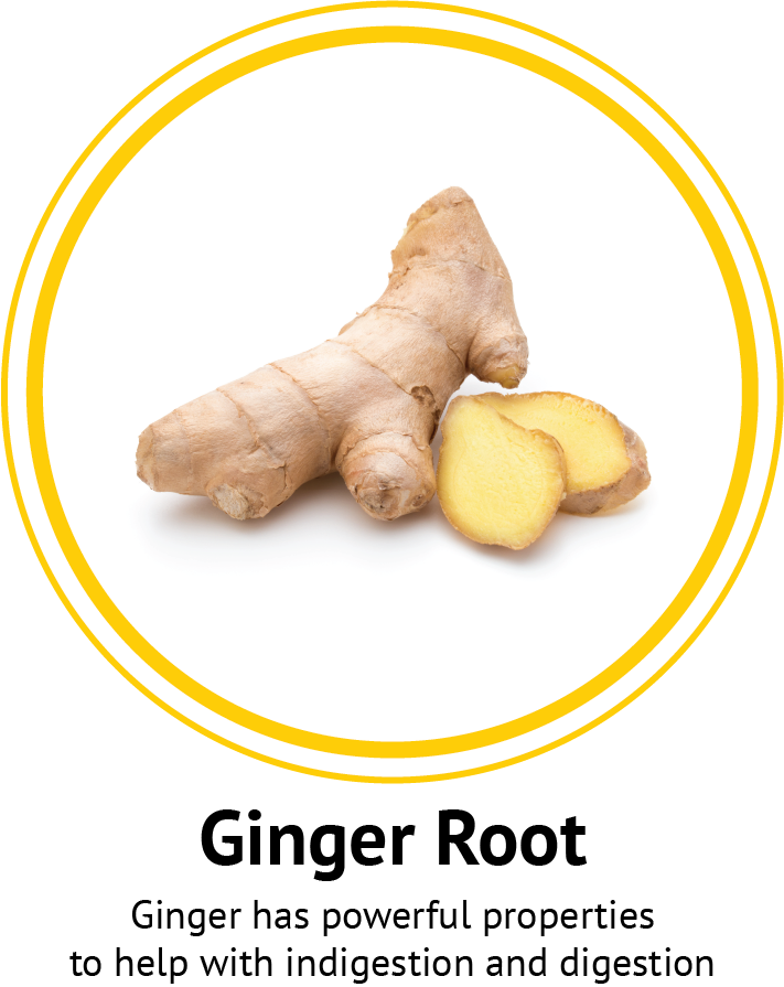 Ginger Root Nutra Bee