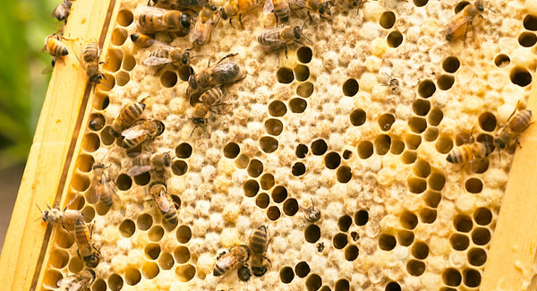 Natural Antibacterial Bee Propolis and Raw Honey