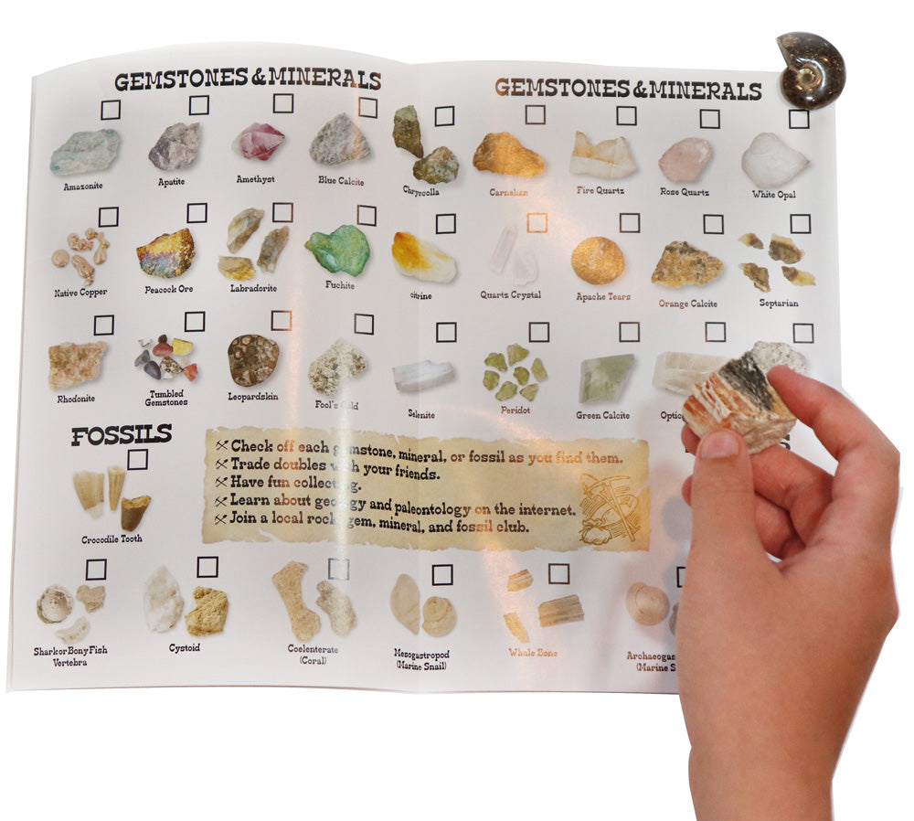 Club SciKidz STEM Box Fun With Fossils!