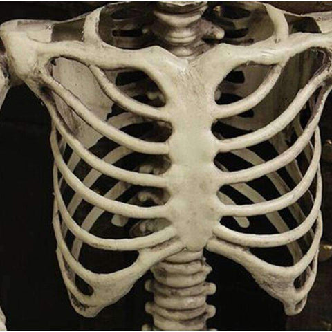 JLS™Full Body Skeleton - LIMITED EDITION