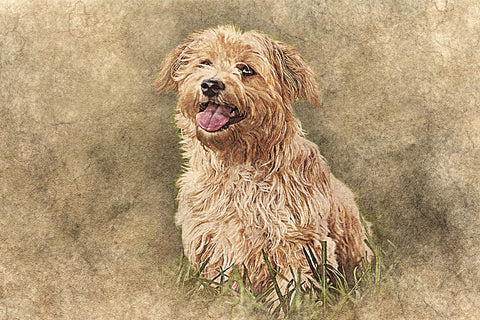 Get a Pet Portrait for Your Beloved Companion